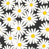Daisies vector pattern Stock Photo