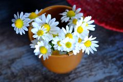 Daisies in the village Stock Photo