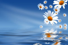 Daisies and water. White daisies and blue water background with space for text Stock Photo