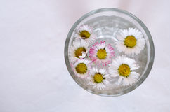 Daisies on water Royalty Free Stock Photo