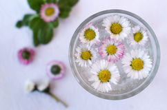 Daisies on water Royalty Free Stock Images