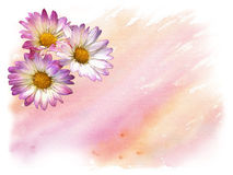 Daisies watercolor background Royalty Free Stock Photos