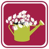 Daisies in Watering Can Royalty Free Stock Images