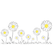 Daisies on white background Royalty Free Stock Photos