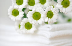 Daisies on White Clothes Stock Images