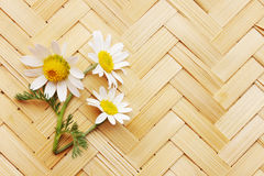 Daisies on a wicker board Stock Image