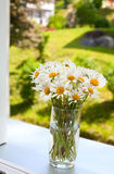 Daisies on a window-sill Royalty Free Stock Photos