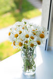 Daisies on a window-sill Royalty Free Stock Image