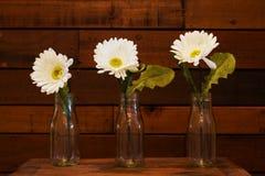 Daisies on Wood Paneled Background Stock Image