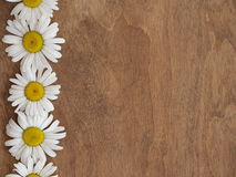 Daisies on wooden background. Daisies on brown wooden background Royalty Free Stock Photography