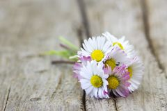 Daisies on wooden background Stock Photos