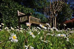 Daisies and wooden bench. Daisies in an italian garden and wooden bench Royalty Free Stock Photo