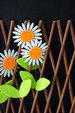 Daisies In The Wooden Fence. Daisies in wooden trellis fence on black background Stock Photography