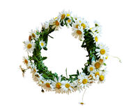 Daisies wreath royalty free stock images