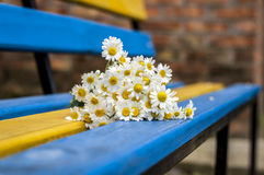 Daisies on yellow and blue bench Royalty Free Stock Photos