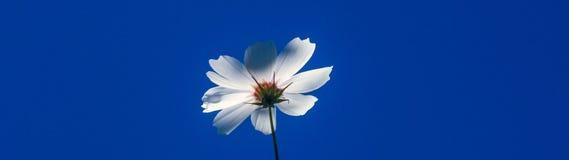 Daisy και ουρανός στοκ φωτογραφία με δικαίωμα ελεύθερης χρήσης