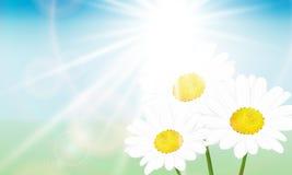 Daisy και ο ήλιος Στοκ Φωτογραφία
