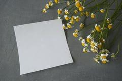 Daisy με μια αυτοκόλλητη ετικέττα σε ένα συγκεκριμένο υπόβαθρο Στοκ φωτογραφίες με δικαίωμα ελεύθερης χρήσης