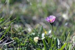 Daisy μια ηλιόλουστη ημέρα Στοκ εικόνες με δικαίωμα ελεύθερης χρήσης