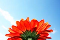 Daisy στον ουρανό Στοκ εικόνα με δικαίωμα ελεύθερης χρήσης