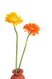 Daisy. Pair of daisy flowers in pot  - path added Royalty Free Stock Image