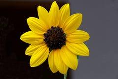 Free Daisy Stock Photography - 10951582