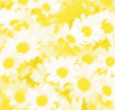 Daisy. Mead stock illustration