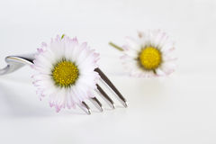 Daisy. On fork with copy space stock images
