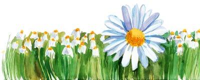 Daisy. Beautiful daisy flowers lawn panorama painting stock illustration