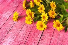 Daisy_3 Fotografia Stock