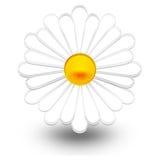 Daisy. An illustration of a daisy Stock Images