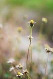 Daisy Against Vivid Green Grass Fotografía de archivo libre de regalías