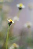 Daisy Against Vivid Green Grass Imagen de archivo