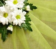 Daisies on organza Royalty Free Stock Photo