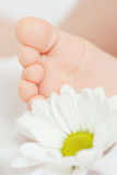 Daisy and baby foot Royalty Free Stock Photo