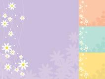 Daisy Background Royalty Free Stock Image