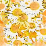 Daisy Background Royalty Free Stock Images