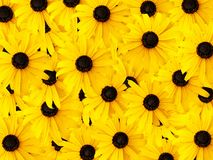 Daisy Background Royalty Free Stock Photos