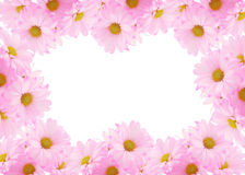 Daisy background Stock Photo