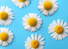 Free Daisy Background Royalty Free Stock Image - 206926