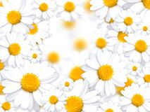 Daisy background. Flowers white illustration Royalty Free Stock Photo