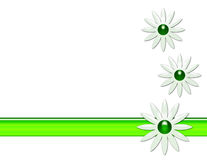 Daisy Background. White background with large daisies and green stripe stock illustration