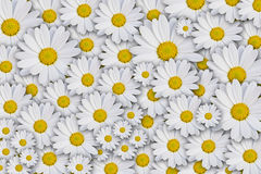 Daisy background Royalty Free Stock Photography