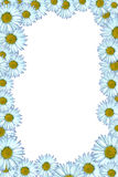 Daisy Background Stock Images
