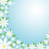 Daisy background. Retro styled daisy flowr background Stock Photos