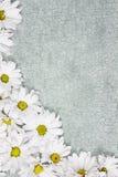 Daisy Background Fotos de Stock