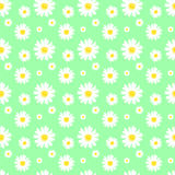 Daisy Background Photo libre de droits