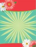 Daisy background Royalty Free Stock Photos