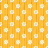 Daisy Background Photos stock