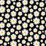 Daisy Background Photos libres de droits